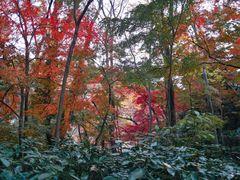 紅葉2016.jpg